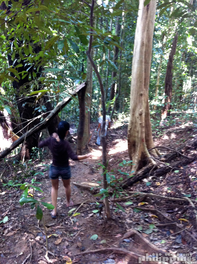 Subic Tree Top Adventure Hike